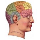 De anatomie van de hersenen