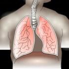 De ademhaling en de luchtwegen