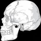 Histologie: welke weefsels zijn er?