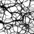 Het zenuwstelsel van het menselijk lichaam: Neuronen