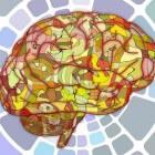 De organisatie van het centrale zenuwstelsel