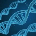 Wat is genetica? De basis van het DNA uitgelegd