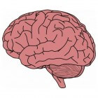 Het geheugen; werking, ligging en functie binnen de hersenen