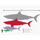 De megalodon, een enorme prehistorische haai
