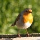 Navigatie en oriëntatie bij vogels