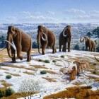 De steppemammoet, de grootste mammoet uit de prehistorie