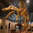 De spinosaurus, een enorm roofdier uit de prehistorie
