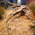 Sarcosuchus vs. deinosuchus