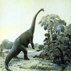 De diplodocus, een enorme dinosaurus uit de prehistorie