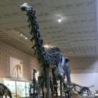 De brontosaurus, een prehistorische planteneter