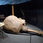 De doedicurus, een prehistorisch gordeldier