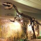 De megalosaurus, een vleesetende dinosaurus