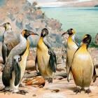 De enorme afmetingen van prehistorische pinguïns