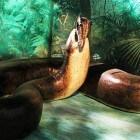 De titanoboa, een enorme slangensoort uit de prehistorie