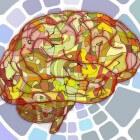 Neuropsychologie, een onontdekt gebied