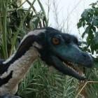 De velociraptor, een vleesetende dinosaurus
