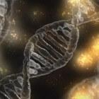 Uitleg & voorbeeld dominante, recessieve en incomplete genen