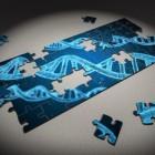 Wat is het verschil tussen homozygoot en heterozygoot?