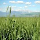 Geografie Israël: (hightech) landbouw – vroeger en heden