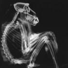 Elektromagnetisch spectrum: röntgenstraling