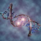 Evolutie: 5 hardnekkige misverstanden