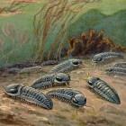 De eerste massa-extinctie in de geschiedenis, het Hirnantien