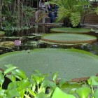 De hortus botanicus (botanische tuin) in Leiden