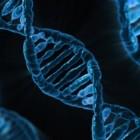 Het humane genoom project (human genome project)