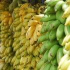 De Zwarte Sigatoka: een hardnekkige bananenschimmel