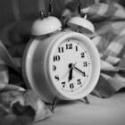 Polyfasisch slapen: Beknibbelen op slaap