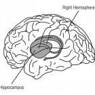 Geheugenchip vervangt de hippocampus