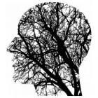 Gedachten nemen struikachtige gestalten aan in het brein