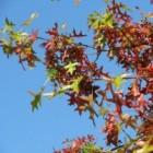 Gezondheidsbepaling van bomen via VTA-analyse