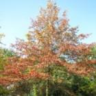 Stabiliteit van bomen bepalen