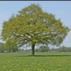 Bomen reageren op straling