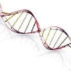 Wat is genetische modificatie of genetische manipulatie?