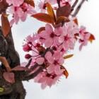 De lente in Nederland