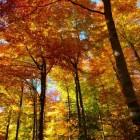 De herfst in Nederland