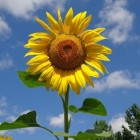 2003, een zonnig en warm weerjaar