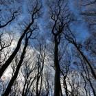 De voordelen en nadelen van een zachte winter