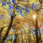 Herfst 2016: Veelal rustig en buitengewoon zonnig weer