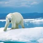 Een hittegolf geeft veranderingen rond de Noordpool