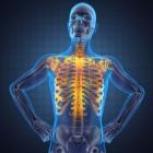 Anatomie - Spieren en functies van de elleboog en bovenarm