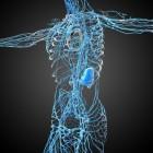 Het lymfevaatstelsel