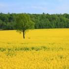Geografie: landbouw - invloed natuurlijk milieu