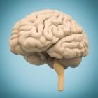 Cognitie: lange- en kortetermijngeheugen