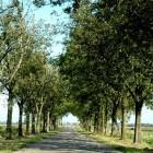Bomenkap: wat mag en wat niet