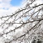 Koude maartmaanden: de kou in maart 2013